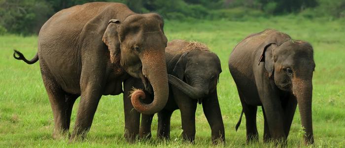 cha's organics, cha's, elephants,